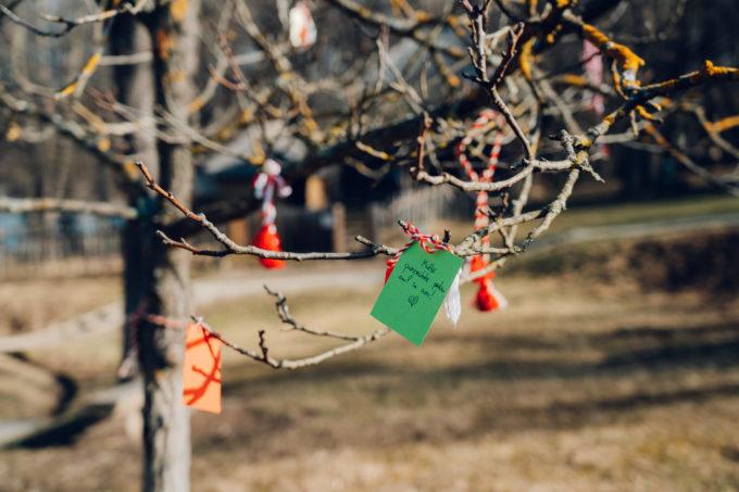 Sibiu: Măr unic în oraş - pomul gândurilor bune în care fiecare aşază altfel mărţişorul