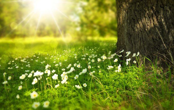 Temperaturi record în Marea Britanie, primăvară precoce în Franţa sau Scandinavia şi ninsoare în Turcia şi Grecia