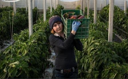 The Observer: România și Italia își unesc forțele pentru a pune capăt exploatării lucrătoarelor românce în Sicilia