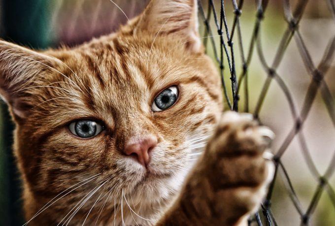 Timiş: Bărbat trimis în judecată pentru că a omorât mai multe pisici pe care le adoptase