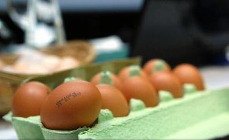 Trei țări europene fac anchete în scandalul ouălor contaminate cu fipronil
