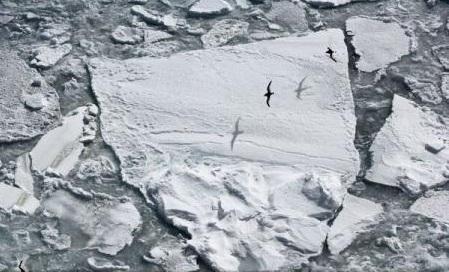 Un instrument de prognoză realizat de NASA poate indica ce orașe vor fi inundate ca urmare a topirii ghețarilor