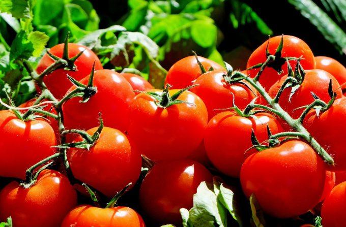 Un nou virus ameninţă tomatele din Franţa după ce a lovit mai multe state europene
