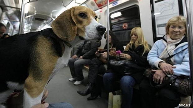 Un perro por viajero en el Metro de Madrid