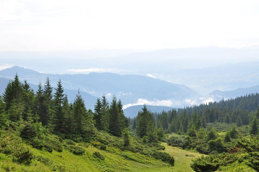 Un proiect transfrontalier cu România drept partener, printre câştigătorii premiilor Natura 2000