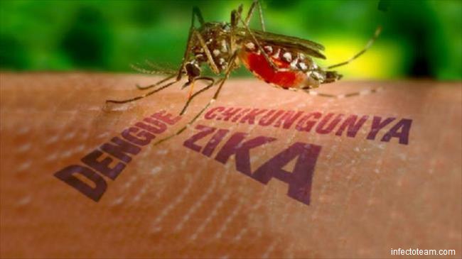 VIRUSUL ZIKA: OMS declară ''urgență globală de sănătate publică''