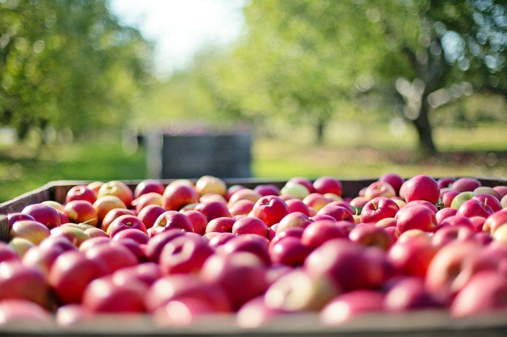 Vrancea: O femeie de 90 de ani a donat patru tone de mere pentru copiii şi adulţii instituţionalizaţi