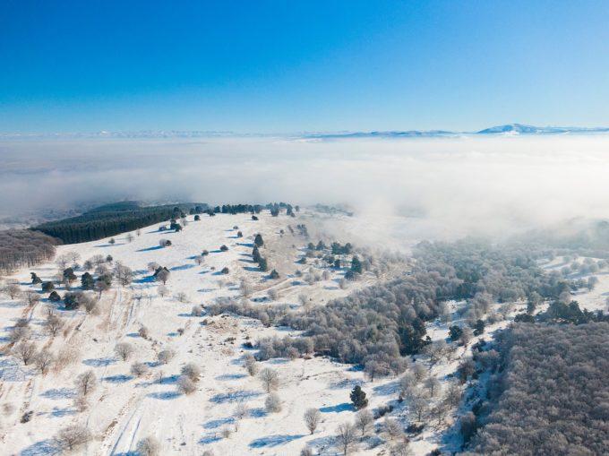 WWF România: Sperăm ca amenzile pe piaţa lemnului să descurajeze practicile anticoncurenţiale