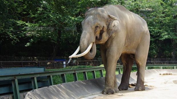 Zoo Târgu Mureș, primul din România înscris pe harta mondială a grădinilor zoologice